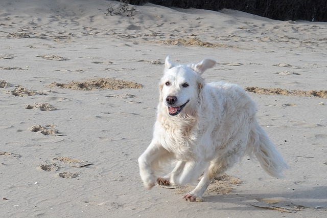 Playa para perros Barcelona